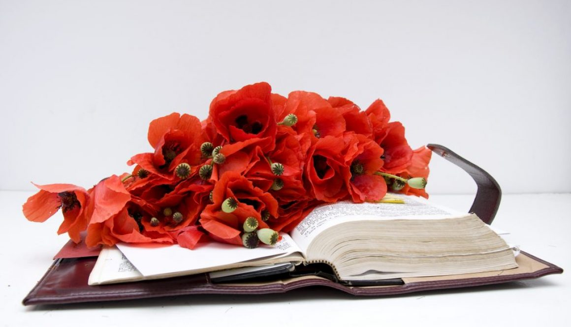 November Flower Of The Month Poppies And Other Symbolic Stems