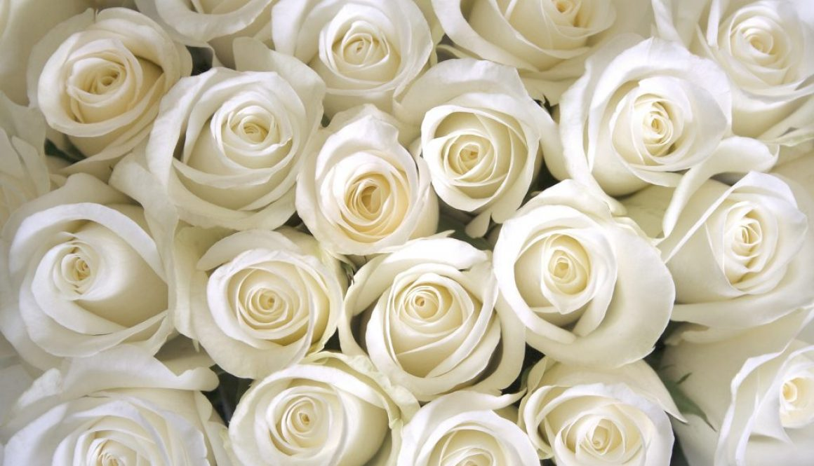 February Funeral Flower of the Month: It had to be the rose!